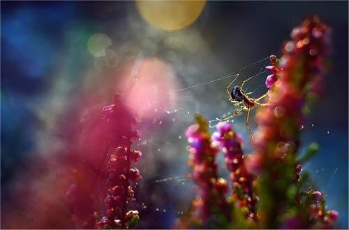 паук сфотографированный в макро