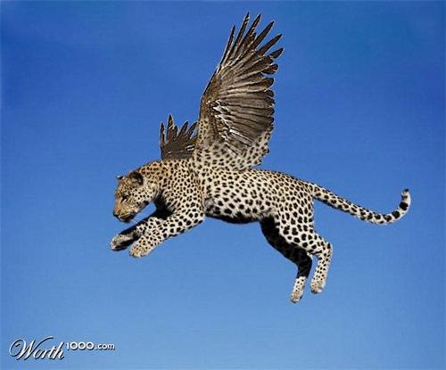 тигро-ангел
