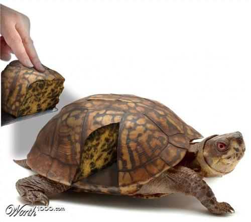 черепаха-пирог