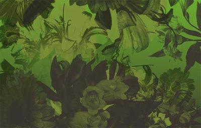 Цветы в высоком разрешении