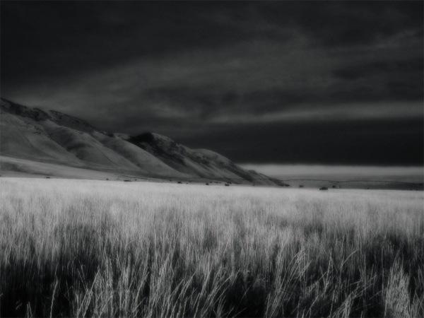 черно-белая природа