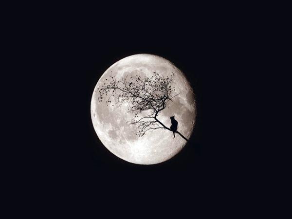 кошка на ветке на фоне луны