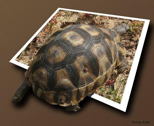 Черепаха за фотографей