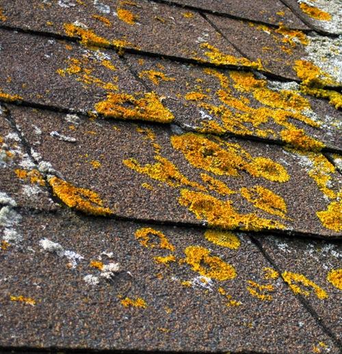 Плесень и ржавчина на крыше