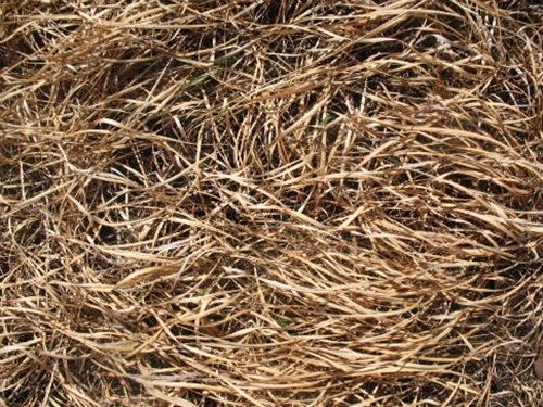 текстура выгоревшей травы
