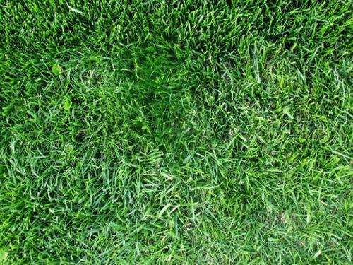 текстура травы