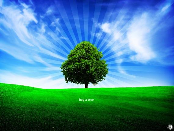 Объятия дерева