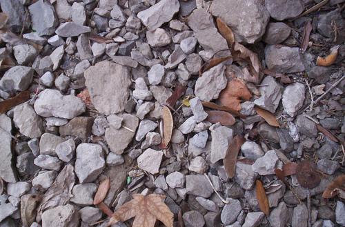 Листья среди мелких камней