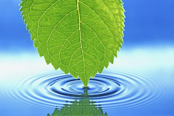 Лист и вода