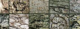 200-текстур-деревянной-коры