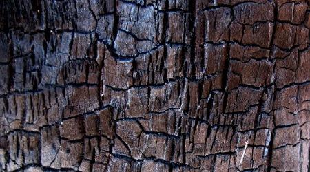 10 бесплатных текстур коры в высоком разрешении