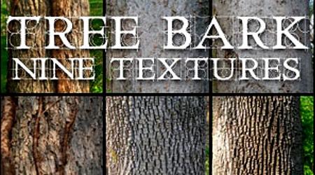 Дерево: текстуры коры