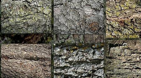Набор текстур коры дерева