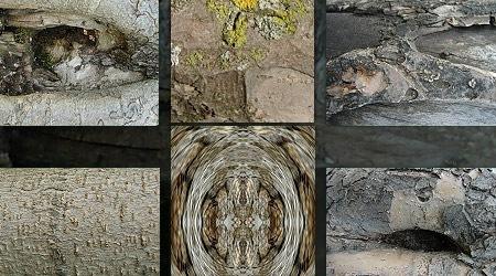 Еще один набор текстур коры дерева