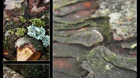 Текстуры коры дерева