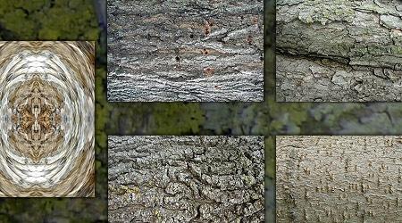 Набор из 10 текстур коры дерева