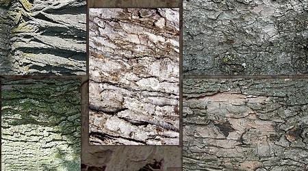 Набор текстур деревянной коры