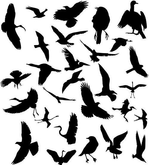 Набор из силуэтов птиц