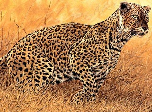 Иллюзия в пустыне – гепард