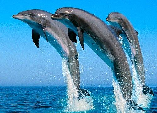 Дельфиньи прыжки