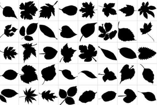 Силуэты листьев