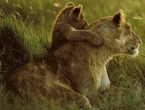 Львица и малыш