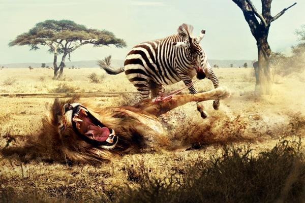 Лев и зебра