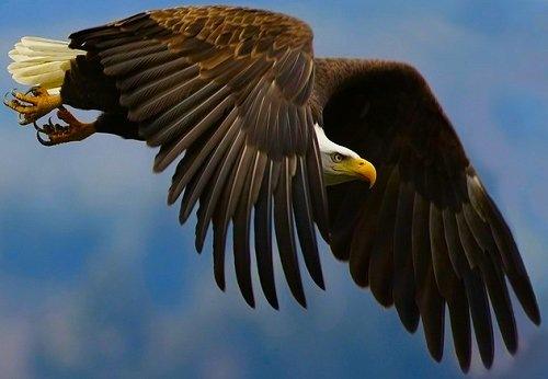 Полет хищника