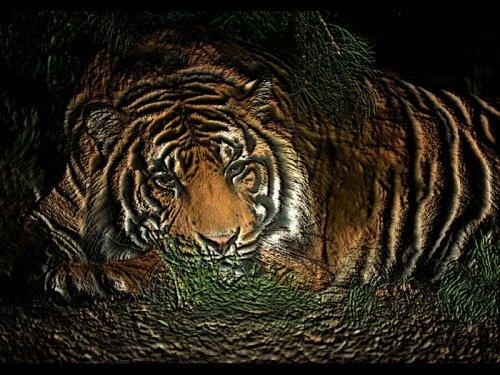 Тигр: король
