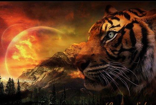 Обои с тигром