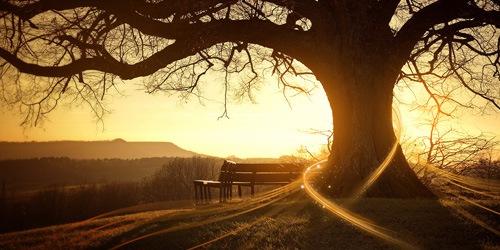 блеск утра и дерево