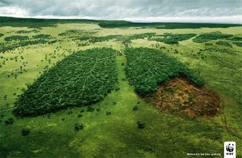WWF: Легкие