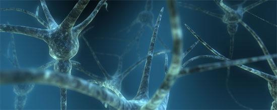 Двойные нейроны