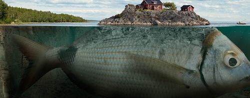 рыба остров