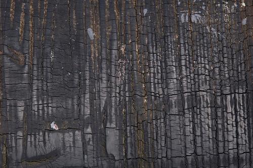 текстура обгоревшего дерева