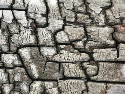 iтрещины на деревянной коре