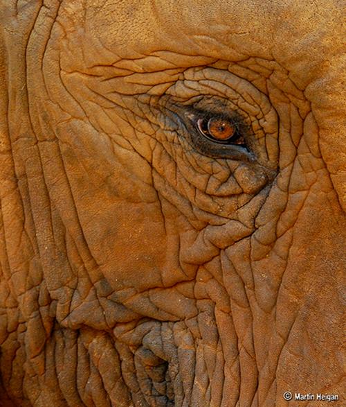 кожа слона