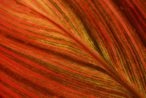 лист с красно-зелеными полосами