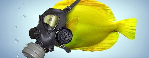 рыбка в маске