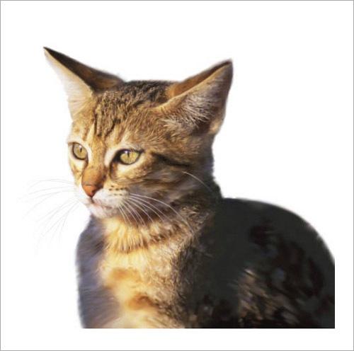 реаличтичная кошка