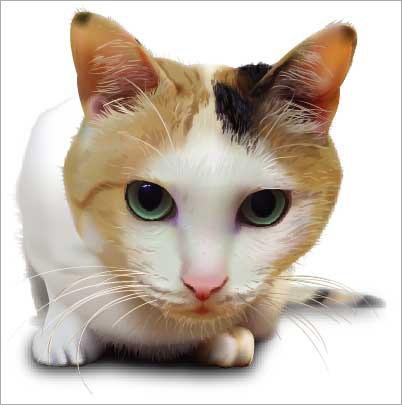 кошка в векторе