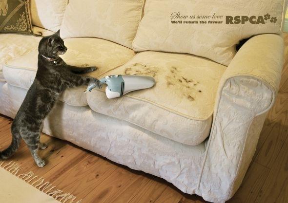 кот с пылесосом