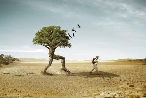 идущее дерево