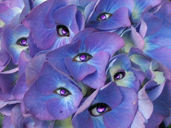 Глаза цветов