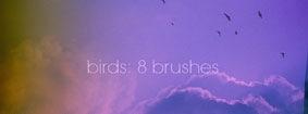 кисти-птиц