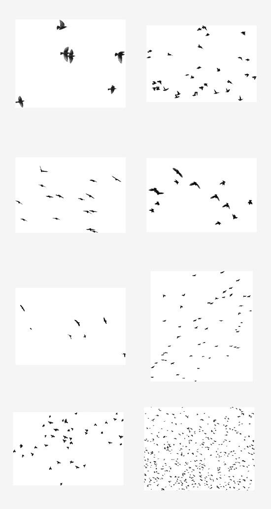 кисти летящих птиц