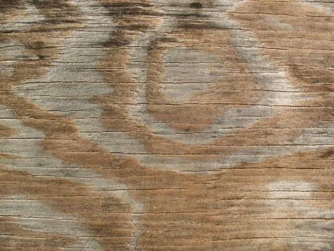 текстура древесины с разводами
