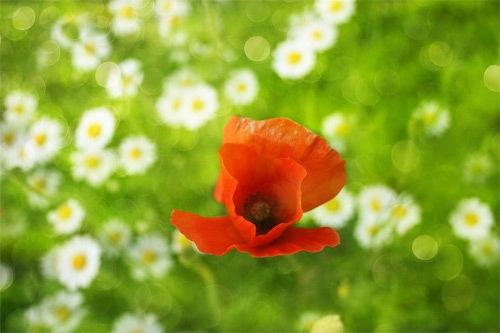 блеск цветов