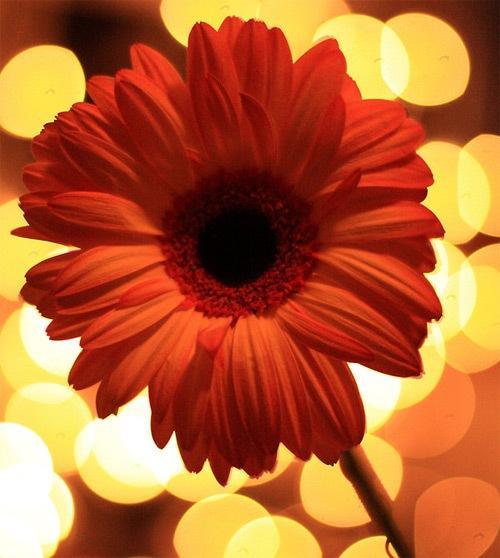 цветок на блестящем фоне