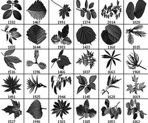 Кисти листьев различных деревьев